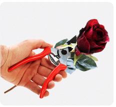 rosenzentrum die richtige rosenpflege. Black Bedroom Furniture Sets. Home Design Ideas
